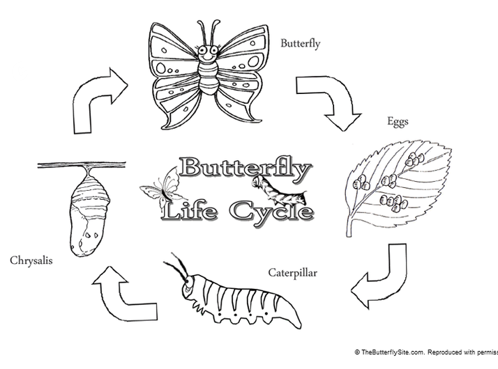 Life Cycle - Crunching Munching Caterpillar